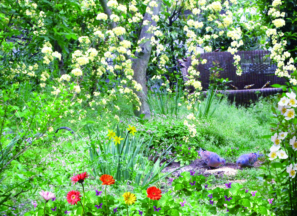 鳥の樹 鳩の庭